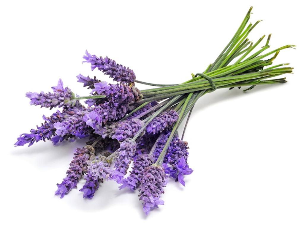 Lavender Body Oil