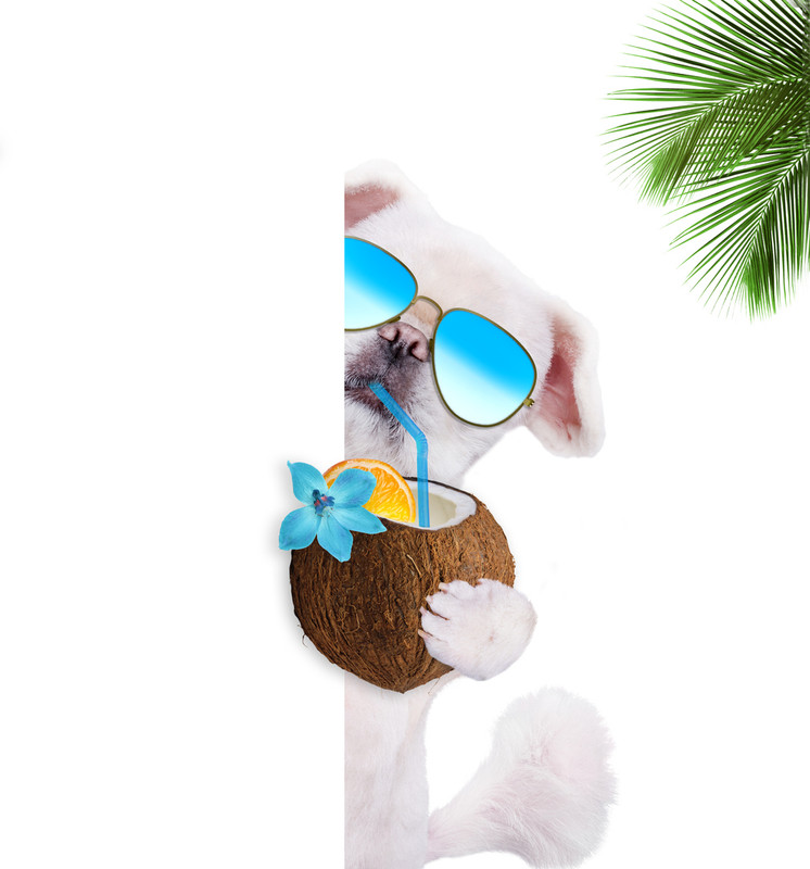 Coconut in Dog Treats.... What are the benefits?