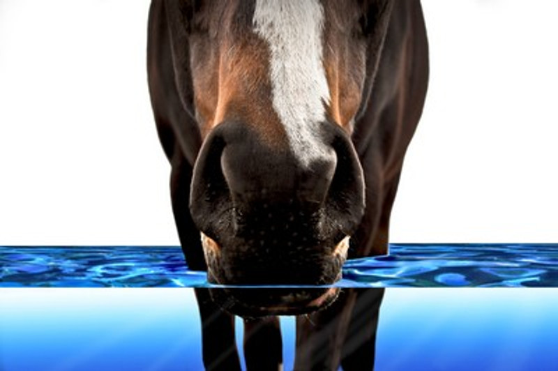 How Important is Water to my Horse?