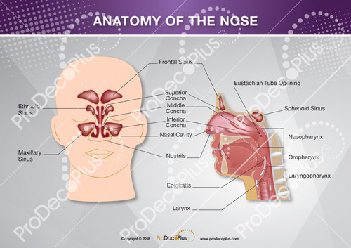 Ear - Nose - Throat Package - ProDecoPlus