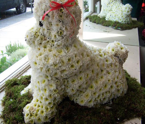 The Floral Dog-FNDOG-01