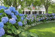 The Advantages of Different Types of Shrubs