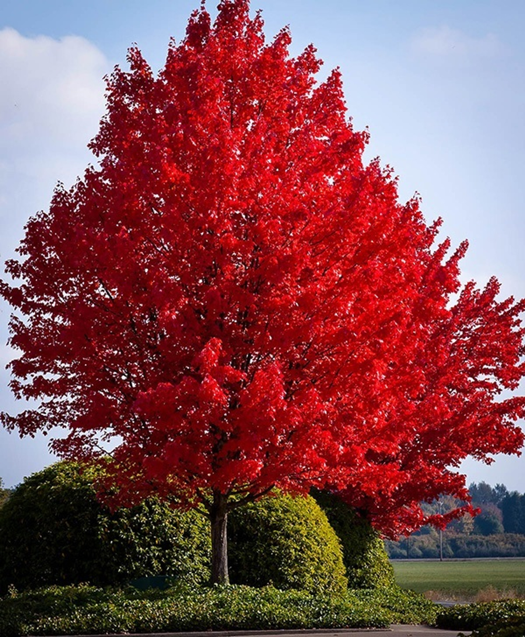 Create Ultimate Landscapes With Perfectly Suited Trees