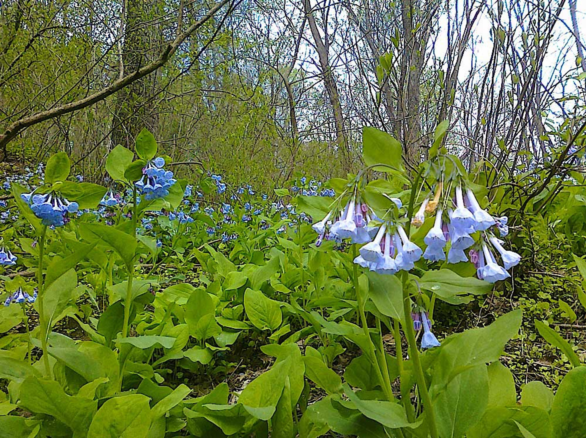 Native Wild Plants - The Easiest Plants To Grow and Flourish Without Lots of Care