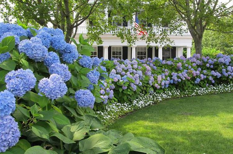 The Advantages Of Different Types Of Shrubs In Landscaping