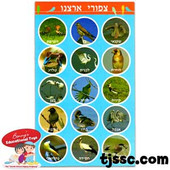 Birds of Israel Stickers