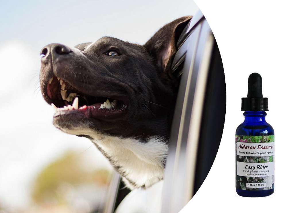 Easy Rider - for dogs that stress and panic over car rides