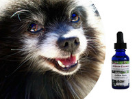 Golden Years - for improved confidence, clarity, and energy in the older dog