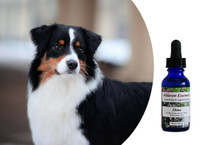 """Shine - to bring out your show or performance dog's """"personality plus"""""""