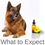 What to Expect Using Flower Essences