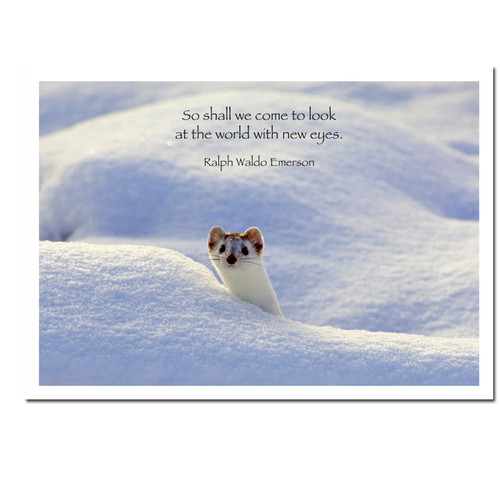 """New Eyes New Years Card cover photo shows white ermine looking out over a snowbank with the quote, """"So shall we come to look at the world with new eyes - Ralph Waldo Emerson"""""""