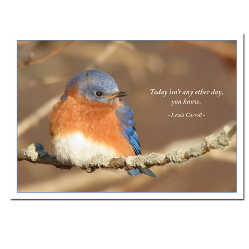 """Wintering Bluebird New Years Card cover photo shows Eastern bluebird fluffed up against the cold and the Lewis Carroll quote, """"Today isn't any other day, you know"""""""
