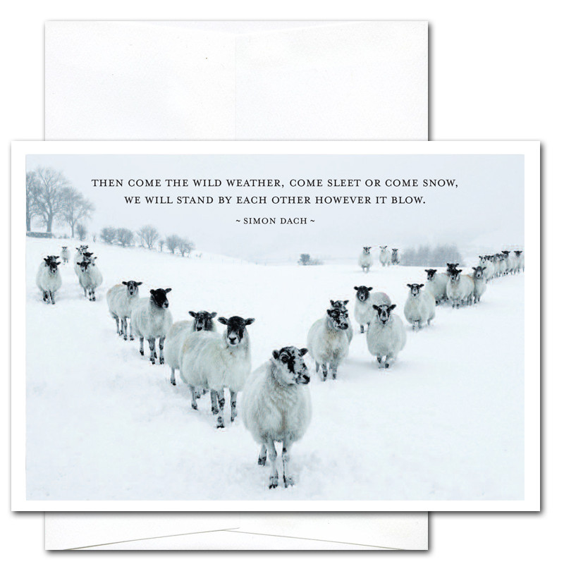 new year cards sleet or snow box of 10 cards env