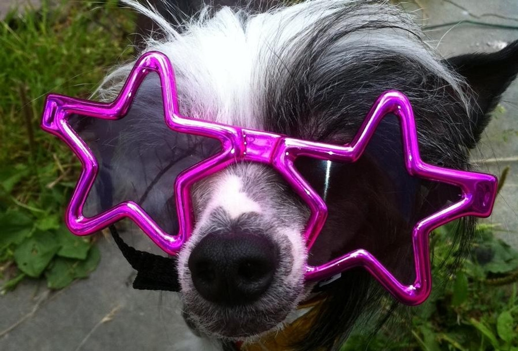 Star Shaped Dog Sunglasses