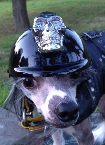Chrome Skull Dog Helmet