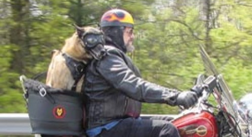 Beast Riders Motorcycle Dog Carrier