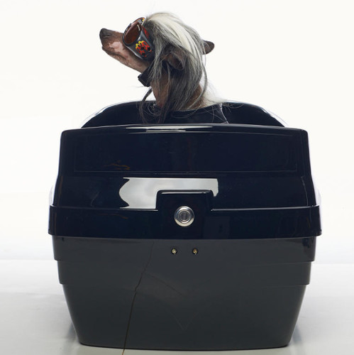 large dog carrier for motorcycle
