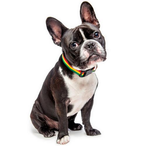 Rasta Dog Collar