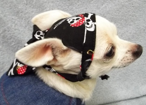 Pirate Skull Dog Doo Rag