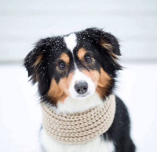 Infinity Dog Scarf (many colors available)