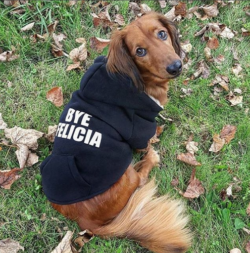 Bye Felicia Dog Hoodie