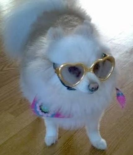 Gold Heart Shaped Dog Sunglasses