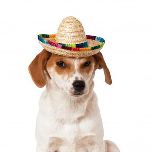 pet sombrero