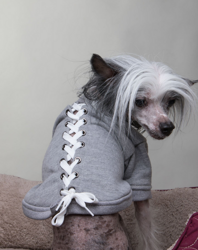 grey lace-up dog sweatshirt