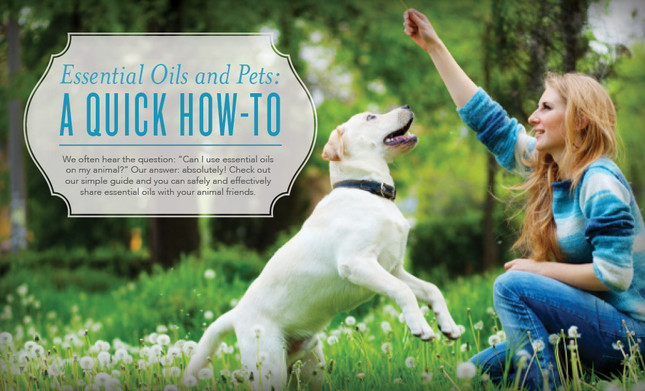 Animal Aromatherapy: Using Essential Oils to Keep our Furry Friends Happy and Healthy