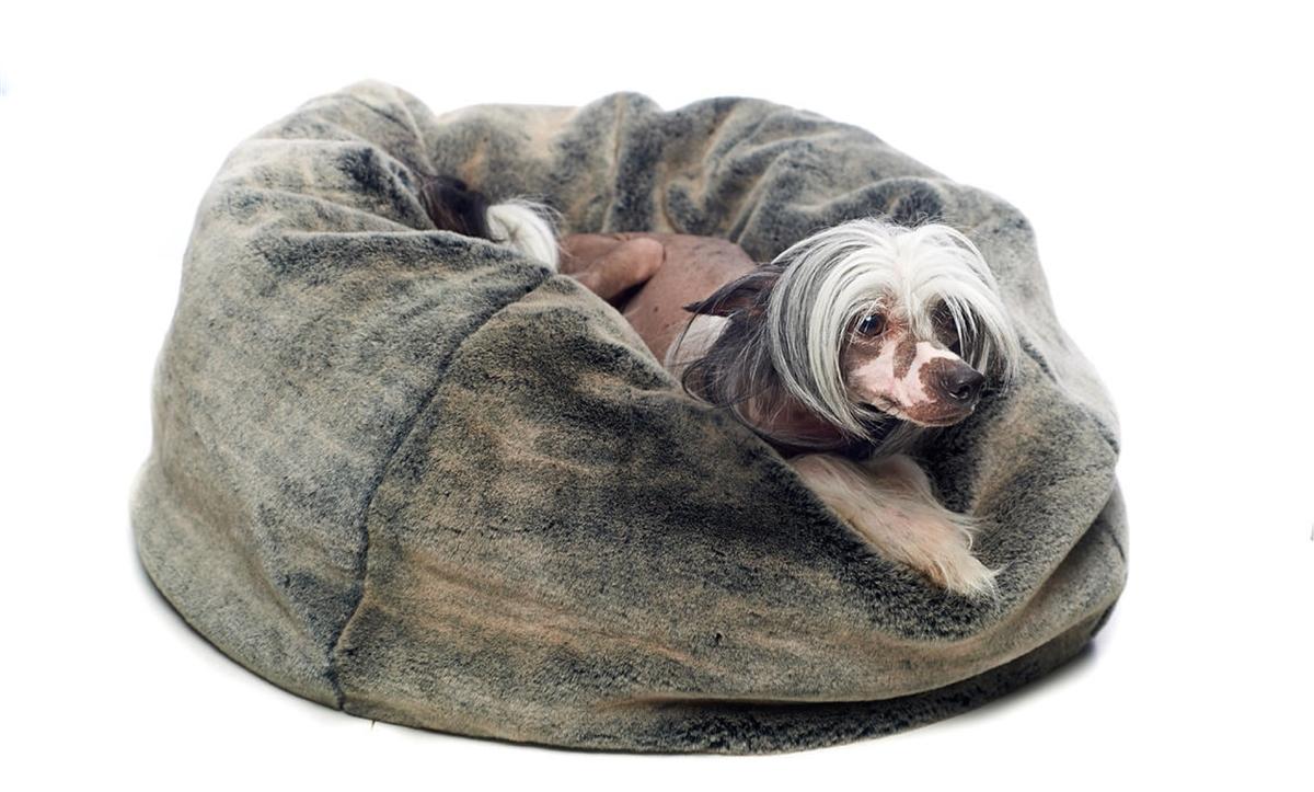 Faux Fur Bean Bag Style Dog Bed Luxury Furniture Rockstar Puppy Premium